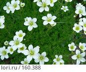 Цветы на фоне мха. Стоковое фото, фотограф Андреева Анастасия / Фотобанк Лори