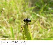 Жучок сидит на травинке. Стоковое фото, фотограф Андреева Анастасия / Фотобанк Лори