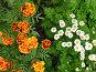 Цветной дуэт, фото № 161240, снято 8 октября 2006 г. (c) Марина Бандуркина / Фотобанк Лори