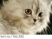 Купить «Кошка», фото № 162592, снято 22 мая 2018 г. (c) Морозова Татьяна / Фотобанк Лори
