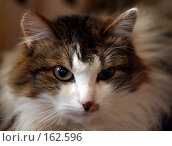 Купить «Портрет кота», фото № 162596, снято 9 марта 2006 г. (c) Морозова Татьяна / Фотобанк Лори