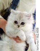Купить «Портрет котенка», фото № 162608, снято 5 июля 2004 г. (c) Морозова Татьяна / Фотобанк Лори