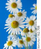 Купить «Ромашки на синем фоне», фото № 162708, снято 6 июля 2007 г. (c) Петрова Ольга / Фотобанк Лори