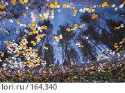 Купить «Осенняя лужа», эксклюзивное фото № 164340, снято 20 октября 2007 г. (c) Александр Алексеев / Фотобанк Лори