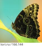 Купить «Большая бабочка листе на сине-оранжевом фоне», фото № 166144, снято 2 января 2008 г. (c) Александр Чураков / Фотобанк Лори