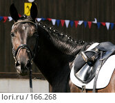 Купить «Портрет лошади», фото № 166268, снято 25 августа 2007 г. (c) Елена Каминер / Фотобанк Лори