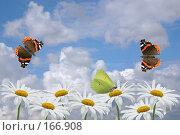 Купить «Ромашки и бабочки на фоне неба», фото № 166908, снято 24 апреля 2007 г. (c) Елена Блохина / Фотобанк Лори