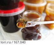 Купить «Прилипшая пчела», фото № 167040, снято 28 сентября 2007 г. (c) Иван / Фотобанк Лори