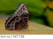 Купить «Большая бабочка сидит на кафеле», фото № 167728, снято 2 января 2008 г. (c) Александр Чураков / Фотобанк Лори