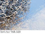 Купить «Заснеженные, заледеневшие ветви кустарника на фоне снега. Красивый фон», фото № 168320, снято 8 января 2008 г. (c) Светлана Силецкая / Фотобанк Лори