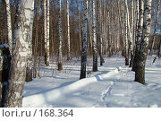Купить «Зима», фото № 168364, снято 5 января 2008 г. (c) Карелин Д.А. / Фотобанк Лори