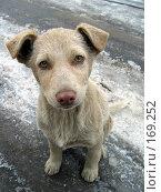 Купить «Собачонка», фото № 169252, снято 21 ноября 2003 г. (c) Сергей Лаврентьев / Фотобанк Лори