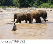 Ловля слонов на удочку. Стоковое фото, фотограф Устинов Геннадий / Фотобанк Лори