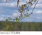 Купить «Весеннее настроение», фото № 173884, снято 8 мая 2006 г. (c) Дмитрий Глебов / Фотобанк Лори