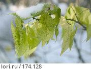 Купить «Первый снег», фото № 174128, снято 21 мая 2018 г. (c) Елена Каминер / Фотобанк Лори