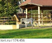 Купить «Зебра и жирафы в зоопарке», фото № 174456, снято 23 сентября 2006 г. (c) Наталья Ярошенко / Фотобанк Лори