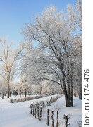 Купить «Аллея в зимнем парке», фото № 174476, снято 12 января 2008 г. (c) Круглов Олег / Фотобанк Лори