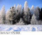Купить «Зима», фото № 175568, снято 5 января 2006 г. (c) Тихомирова Ольга / Фотобанк Лори