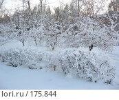 Зимняя сказка. Стоковое фото, фотограф Cавельева Елена / Фотобанк Лори