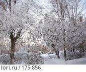 Купить «Зимняя сказка», фото № 175856, снято 10 января 2008 г. (c) Cавельева Елена / Фотобанк Лори