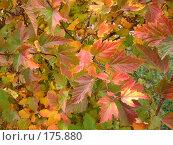 Купить «Кустарник», фото № 175880, снято 11 октября 2007 г. (c) Cавельева Елена / Фотобанк Лори