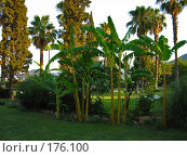 Купить «Банановые деревья и пальмы», фото № 176100, снято 8 июля 2006 г. (c) Маргарита Лир / Фотобанк Лори