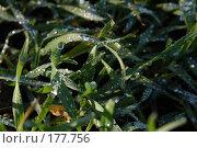 Купить «Роса на траве», фото № 177756, снято 23 сентября 2018 г. (c) Антон Тарасов / Фотобанк Лори