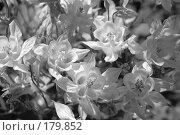 Купить «Фон. Цветы», фото № 179852, снято 16 июня 2007 г. (c) Марина Дмитриевых / Фотобанк Лори
