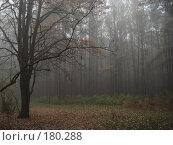 Купить «Лощина», фото № 180288, снято 26 октября 2007 г. (c) Александр Бербасов / Фотобанк Лори