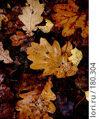 Купить «Под ногами», фото № 180304, снято 26 октября 2007 г. (c) Александр Бербасов / Фотобанк Лори