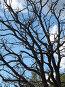 Сухое дерево, фото № 180744, снято 15 июля 2007 г. (c) Сергей Лаврентьев / Фотобанк Лори