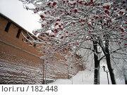 Купить «Рябина у кремлевской стены. Нижний Новгород», фото № 182448, снято 11 ноября 2006 г. (c) Igor Lijashkov / Фотобанк Лори