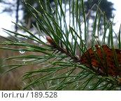 Купить «Осень», фото № 189528, снято 4 ноября 2007 г. (c) Ирина Гусева / Фотобанк Лори