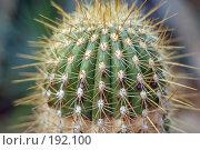 Купить «Кактус», фото № 192100, снято 5 января 2008 г. (c) Катыкин Сергей / Фотобанк Лори
