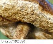 Купить «Гриб подосиновик», фото № 192380, снято 12 августа 2006 г. (c) Анна Филиппова / Фотобанк Лори