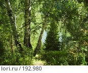 Купить «Смешанный лес и проглядывающие сквозь него воды пруда», фото № 192980, снято 14 августа 2006 г. (c) Иванова Наталья / Фотобанк Лори