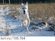 Купить «Бегущий щенок», фото № 195764, снято 3 февраля 2008 г. (c) Игорь Соколов / Фотобанк Лори