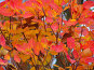 Яркие осенние листья, фото № 195836, снято 13 ноября 2004 г. (c) Иван Сазыкин / Фотобанк Лори
