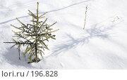 Купить «Маленькой елочке холодно зимой», фото № 196828, снято 3 февраля 2008 г. (c) Анатолий Теребенин / Фотобанк Лори