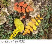 Купить «Листья», фото № 197032, снято 23 октября 2019 г. (c) Семенюк Виталий / Фотобанк Лори
