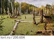 Купить «Болото», фото № 200604, снято 22 сентября 2007 г. (c) Николай Федорин / Фотобанк Лори