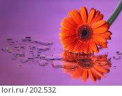 Купить «Красный и лиловый», фото № 202532, снято 17 ноября 2018 г. (c) Григорий Сухарев / Фотобанк Лори