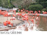 Купить «Розовые фламинго в парке», фото № 203944, снято 26 марта 2007 г. (c) Галина Лукьяненко / Фотобанк Лори