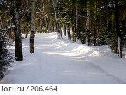 Купить «Дорога в зимнем лесу», фото № 206464, снято 21 февраля 2008 г. (c) Евгений Труфанов / Фотобанк Лори