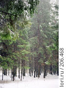 Купить «Снегопад», фото № 206468, снято 20 ноября 2018 г. (c) Евгений Труфанов / Фотобанк Лори