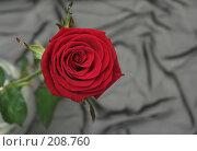Купить «Одна красная роза на сером фоне», фото № 208760, снято 15 января 2008 г. (c) Останина Екатерина / Фотобанк Лори
