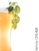 Купить «Бокал пива с хмелем», фото № 210428, снято 1 сентября 2007 г. (c) Михаил Котов / Фотобанк Лори
