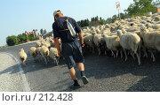Купить «Дагестан. Пастух гонит стадо баранов по дороге», фото № 212428, снято 29 июля 2007 г. (c) Виктор Филиппович Погонцев / Фотобанк Лори