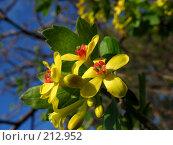 Купить «Цветущий куст», фото № 212952, снято 29 апреля 2006 г. (c) Игорь Струков / Фотобанк Лори