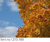 Купить «Золотое на голубом», фото № 213160, снято 24 октября 2005 г. (c) Игорь Струков / Фотобанк Лори